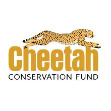 Cheetah Conservation Fund (CCF)
